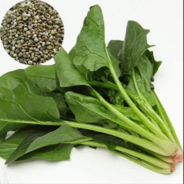 hạt giống cải bó xôi