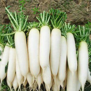 hạt củ cải trắng
