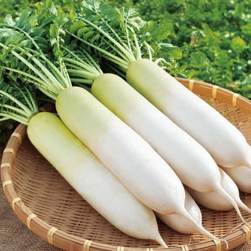 hạt giống củ cải trắng