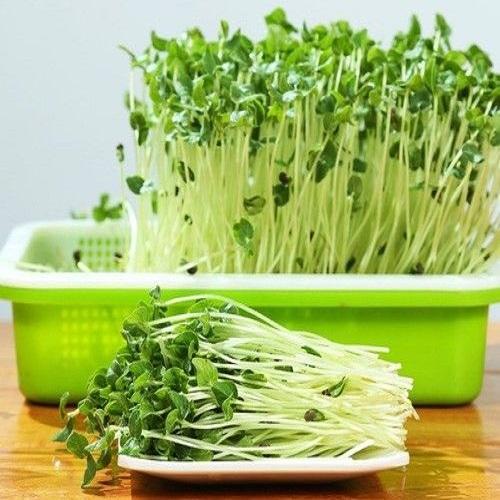 hạt giống rau mầm tại hà nội