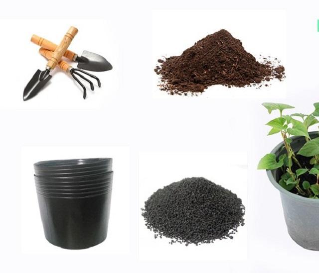 Kỹ thuật gieo trồng hạt diếp cá