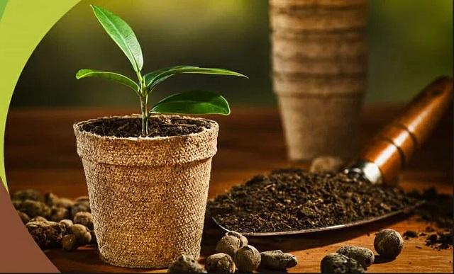Lựa chọn hạt giống và đất trồng thích hợp
