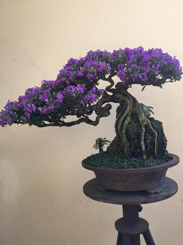 Tìm hiểu về nguồn gốc và đặc điểm của cây linh sam