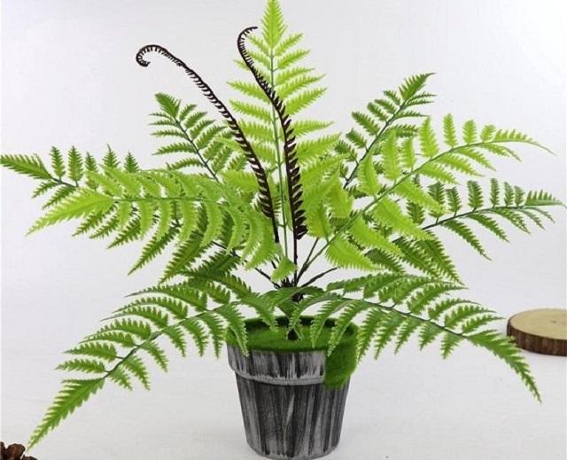 Cách chăm sóc cây dương xỉ