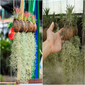 cách chăm sóc cây không khí