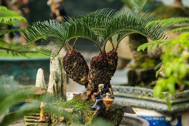 Vườn mặt trời – đơn vị cung cấp cây vạn tuế đẹp